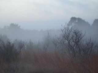 Morning fog 0106