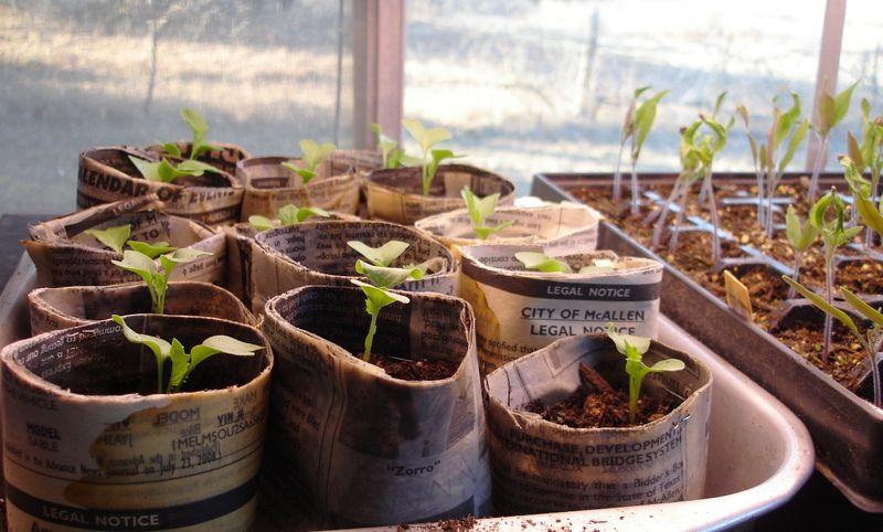 Seed starting 0209