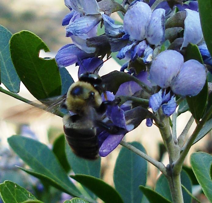 Mt laurel bee 3 0322