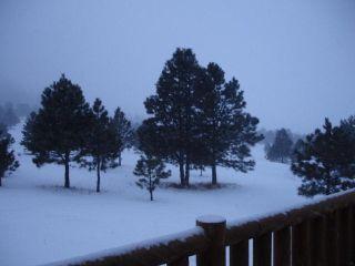 Trees 2 snow 0107