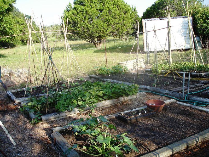 Garden 0910 1