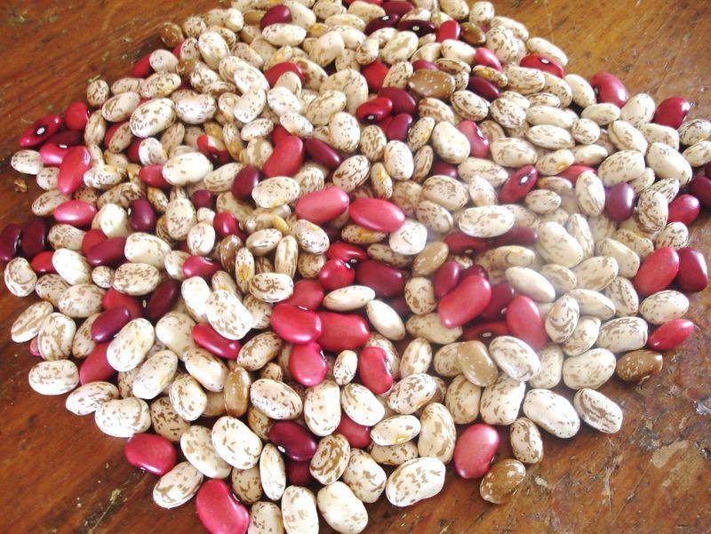 Dry beans 1110