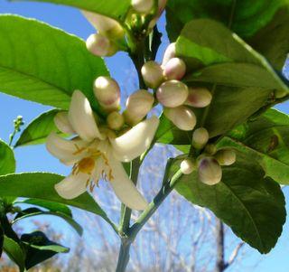 Bloom 3.11