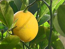 220px-Meyer_Lemon