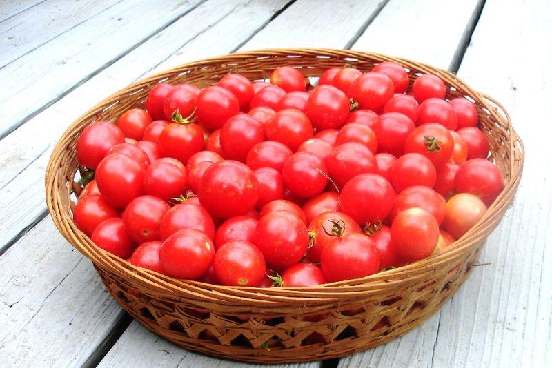 Tomatoes 06.21.11