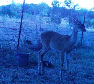 Deer 0911