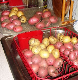 Potatoes3 0511