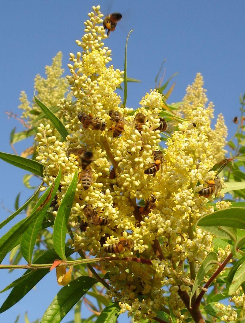 Bees bloom