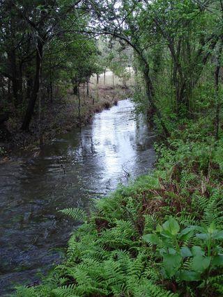 Creek0307