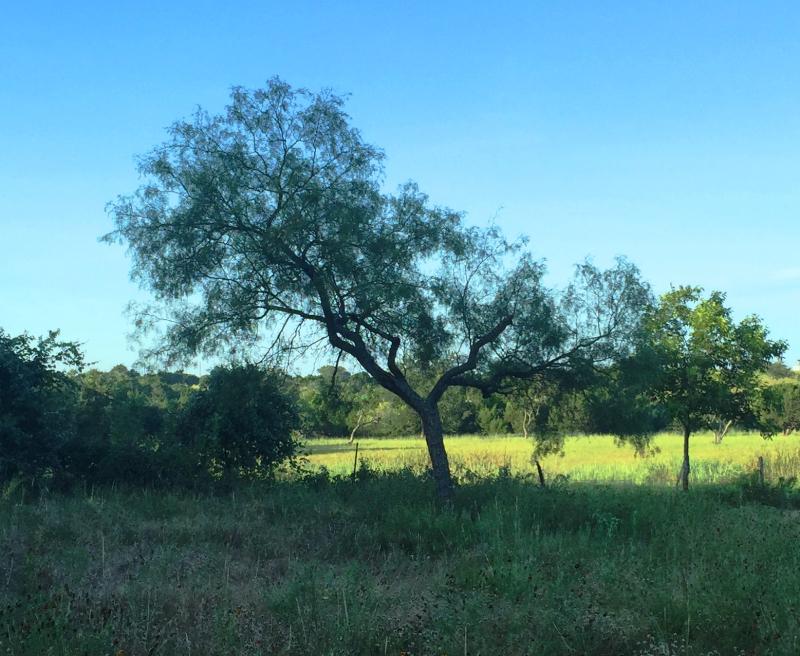 Tree 7.30.17