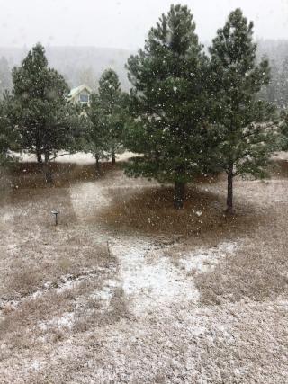 Snow112817