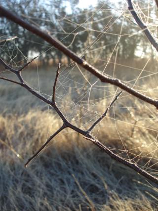 Winter webs 0126