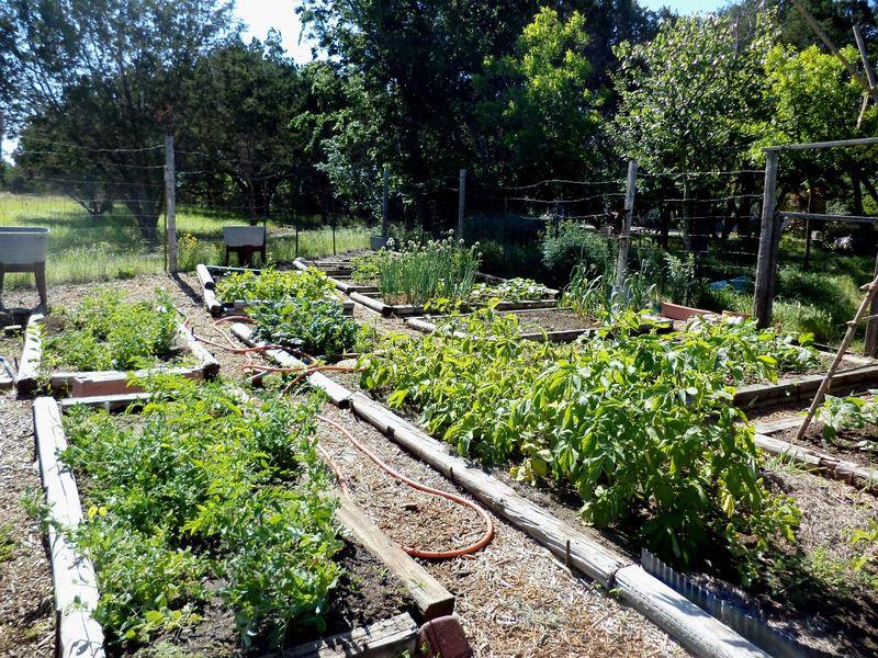 Garden0515
