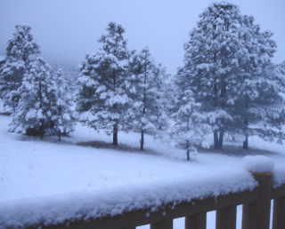 Snow deck 1211