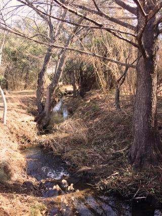 Creek01.25.17