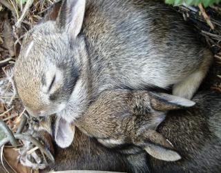 Bunnies 0608