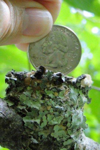Hummingbird-Nest-Size-Linda-AbbyBaby