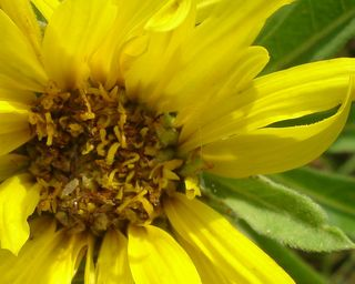 Sunflower0707