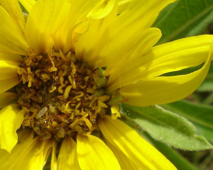 Sunflower0707
