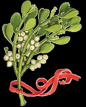 Mistletoe-no-background-1-300x374