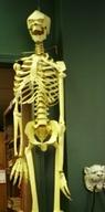 159_skeleton_4