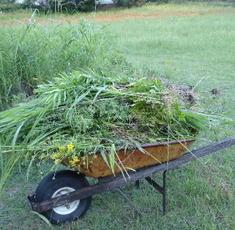 Weeds0507