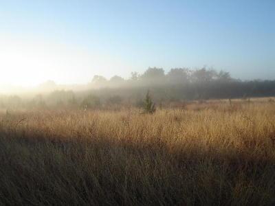 Dawn1206