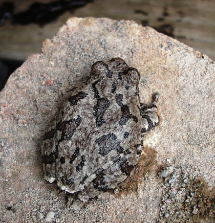 Toad_small_0308