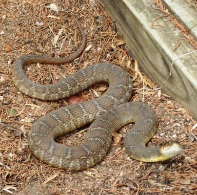 Snake0708_3