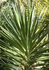 Yucca1005_3