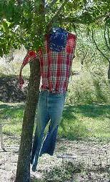 Scarecrow_sm_1
